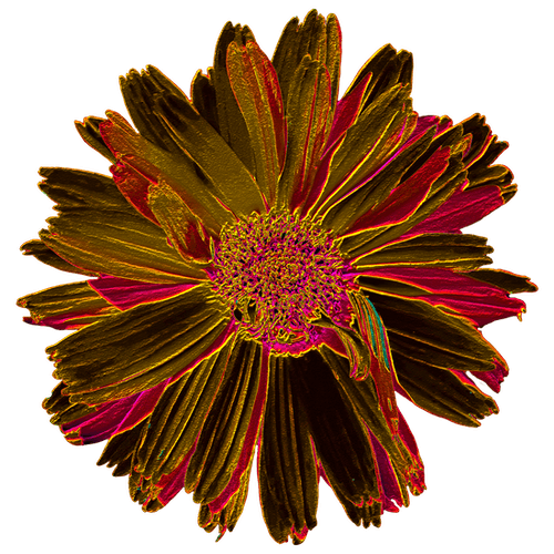 Free stock photo of color, colors, dahlia, metal