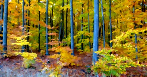 Základová fotografie zdarma na téma akvarel