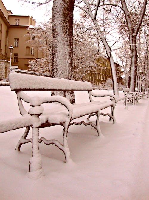 Ảnh lưu trữ miễn phí về mùa đông