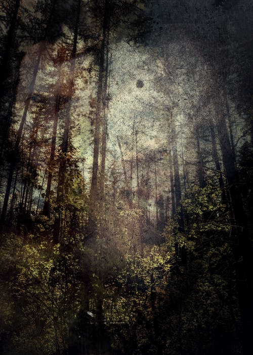 Free stock photo of abstract, forest, grunge, macabre