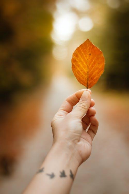 Person Holding An Orange Leaf