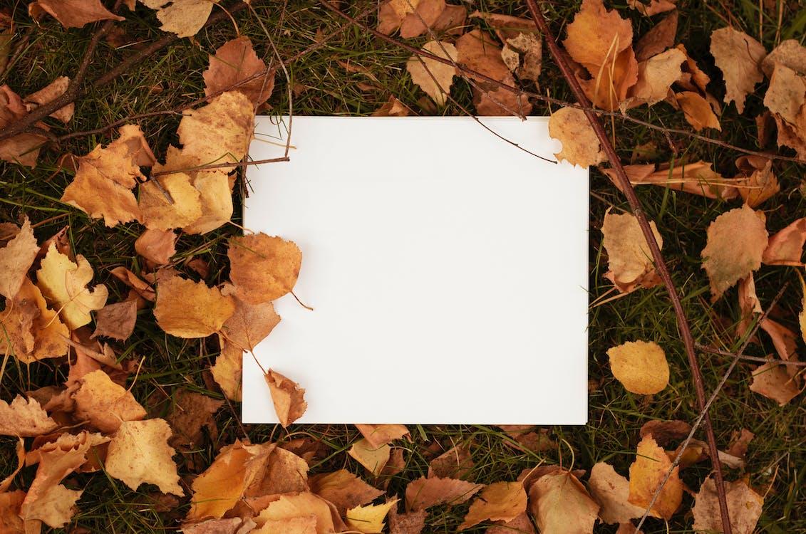 White  Paper on Grass