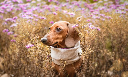 Photo Of Dog On Flower Field