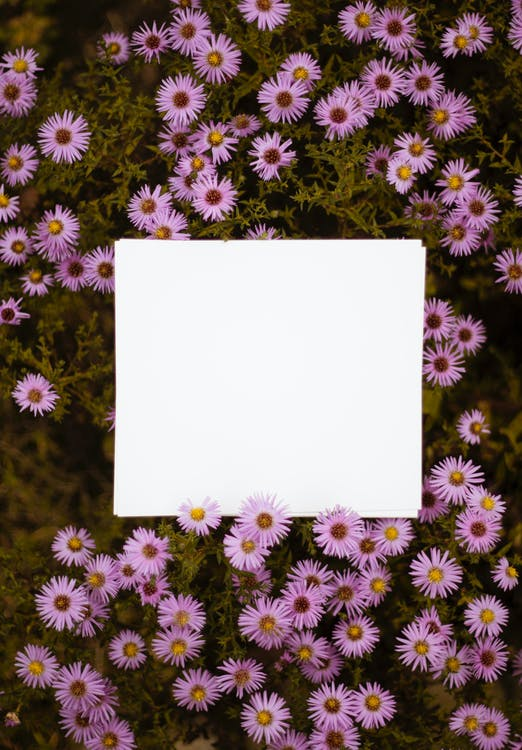 White Paper on Pink Petaled Flowers