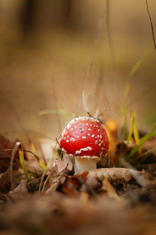 Kostenloses Stock Foto zu draußen, essbar pilz, essen, farbe