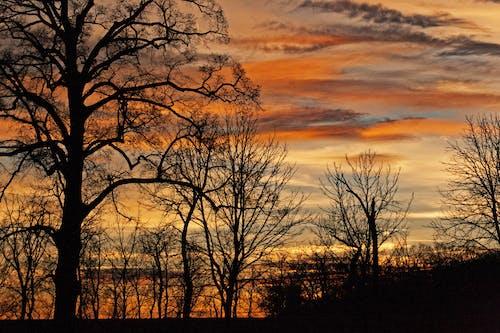 คลังภาพถ่ายฟรี ของ การตกแต่งฤดูใบไม้ร่วง, ตก, ฤดูใบไม้ร่วง, สีของฤดูใบไม้ร่วง