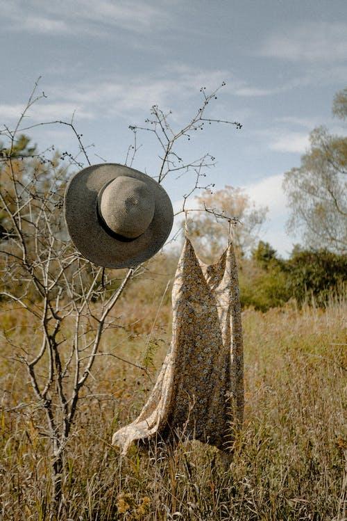 Photo Of Dress Hanging On Tree