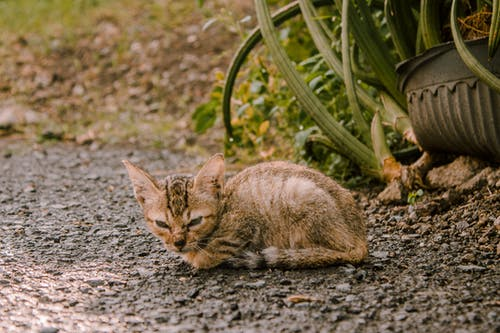 Tabby Kitten On Ground