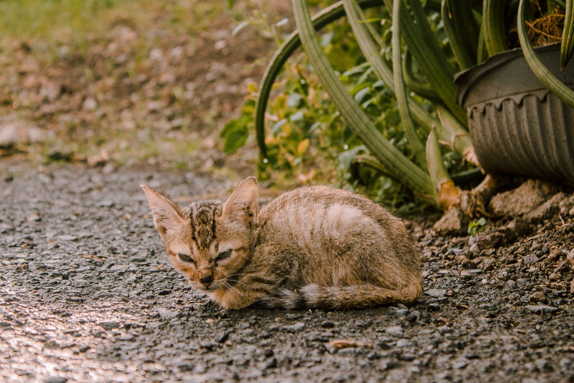 Tabby Kitten On Ground