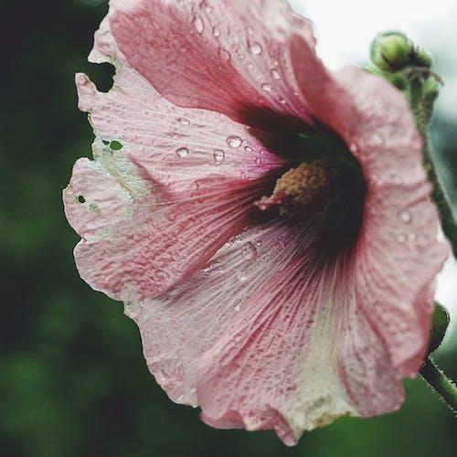 Fotobanka sbezplatnými fotkami na tému detailný záber, flóra, jeseň, kvety