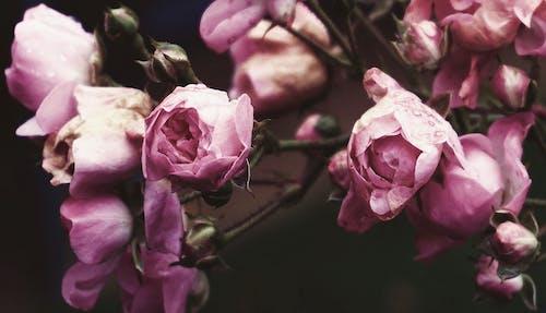 Fotobanka sbezplatnými fotkami na tému detailný záber, flóra, jeseň, jesenná farba