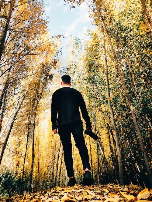 Ingyenes stockfotó alacsony szögű felvétel, erdő, esés, évszak témában