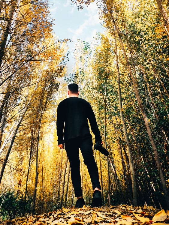 Man Walking in the Woods during Day