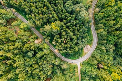 Foto stok gratis eropa, gunung raksasa, hutan, jalan