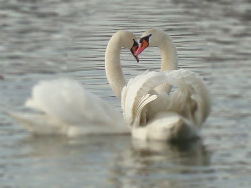 Ảnh lưu trữ miễn phí về chim nước