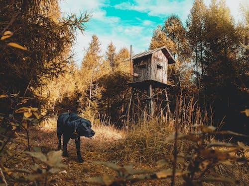 Бесплатное стоковое фото с деревья, животное, собака