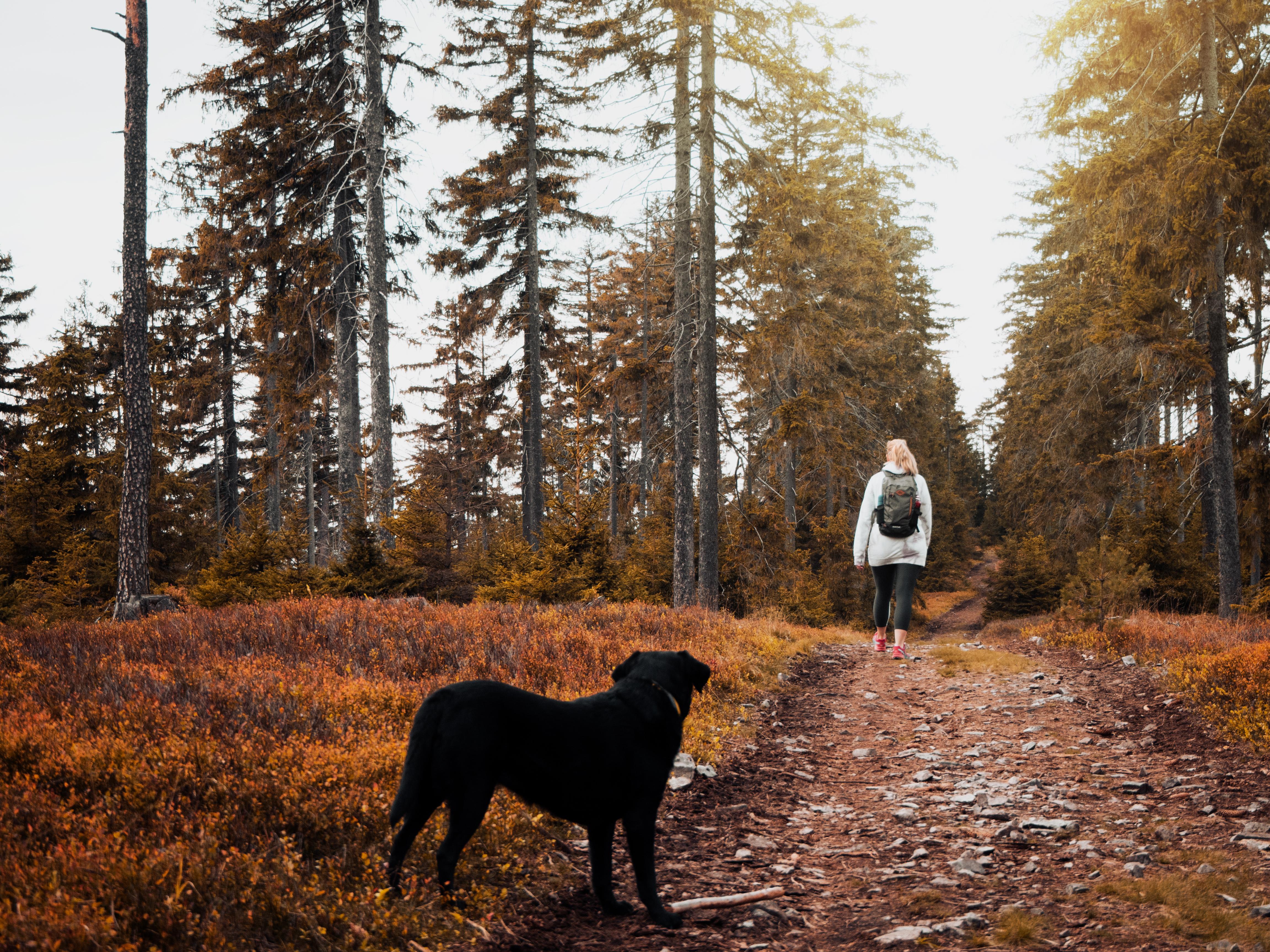 Short-coat Black Dog Standing on Brown Ground