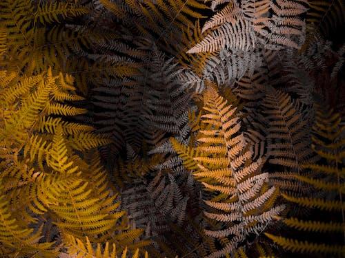 Бесплатное стоковое фото с заводы, коричневый, лист папоротника, листья