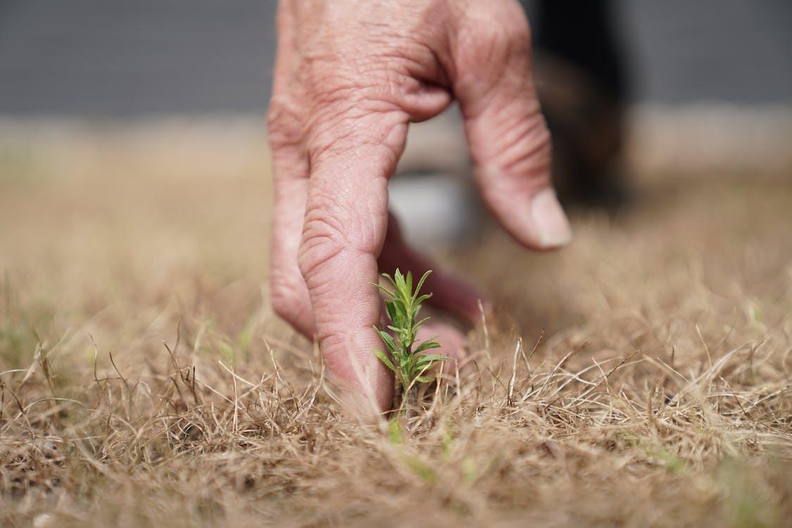 Immagine gratuita di agricoltura, eco, impianti