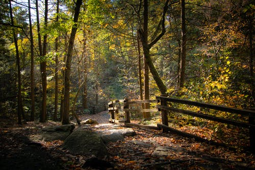 Autumn landscape of silent forest with stony walkway fenced with wooden railing in sunny morning