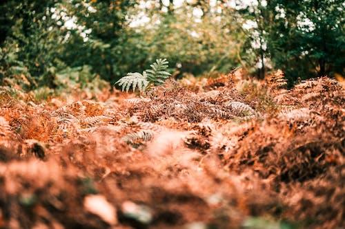 Darmowe zdjęcie z galerii z brązowy, dżungla, jesień