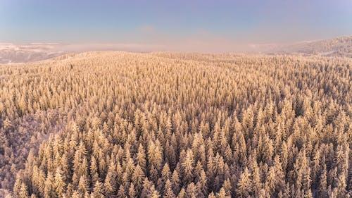 Kostenloses Stock Foto zu bauernhof, bäume, ernte, farm
