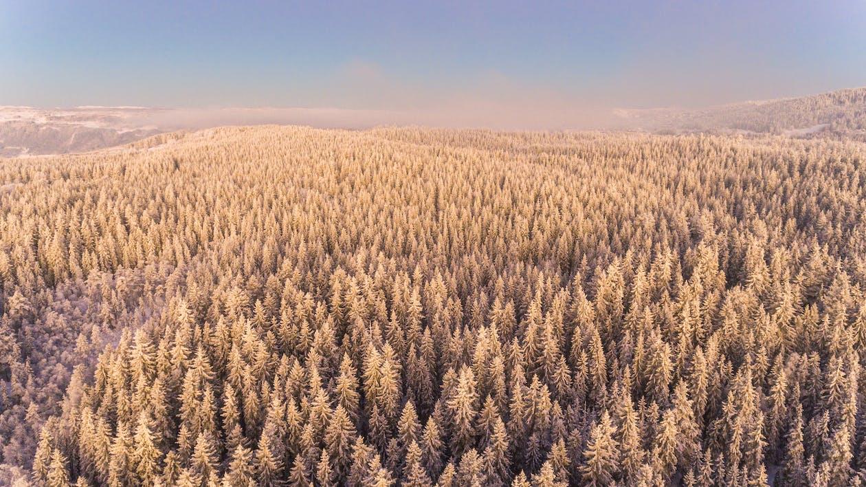 bauernhof, bäume, ernte