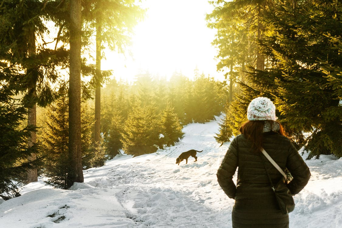 Rear View of Woman in Snow Covered Forest