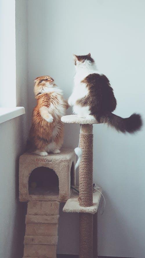 Evcil Hayvanlar, kedi, kedi dövüşü, kedi oyuncak içeren Ücretsiz stok fotoğraf