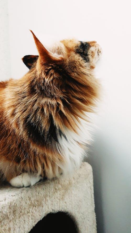 evcil, Evcil Hayvan, kedi, kedi kürk içeren Ücretsiz stok fotoğraf