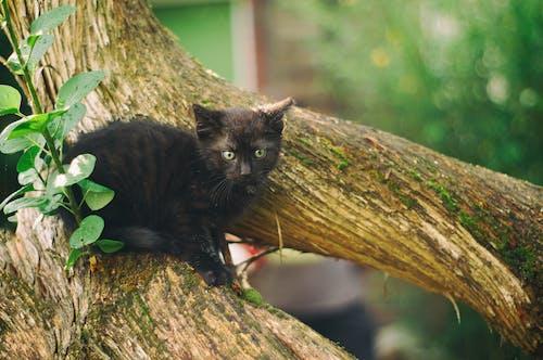 Darmowe zdjęcie z galerii z kot, kotek, natura, zwierzę