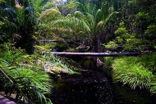 Бесплатное стоковое фото с борнео, джунгли, зеленый, поток