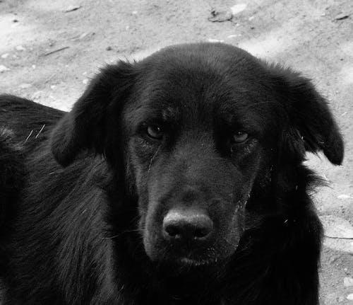 Photos gratuites de animal, chien, chien noir, chien triste