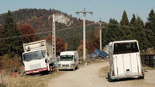 Photos gratuites de automne, camions, campagne, chiens