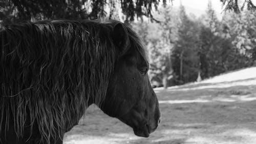 Photos gratuites de cheval, cheval brun, cheval triste, forêt