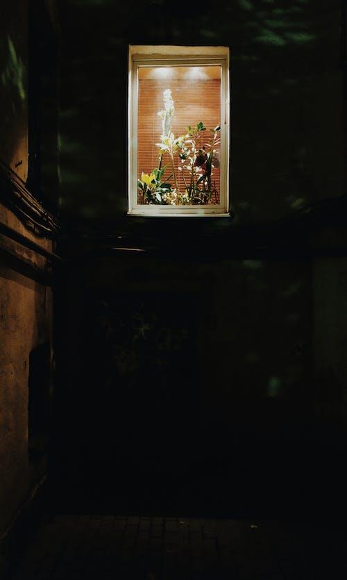 Immagine gratuita di arte, camera, casa, cornice