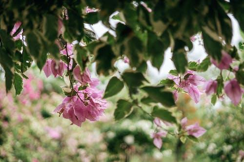 Kostnadsfri bild av blommande växter, delikat, gren, kronblad
