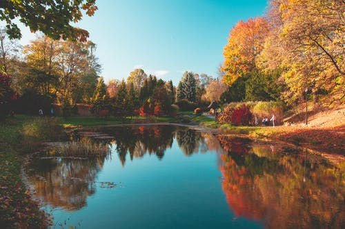 Photos gratuites de arbres, automne, jaune, lac
