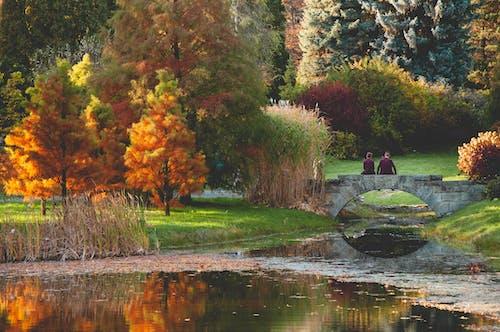 Photos gratuites de automne, jaune, orange, parking