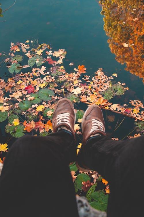 Photos gratuites de automne, feuilles d'automne, lac, pieds