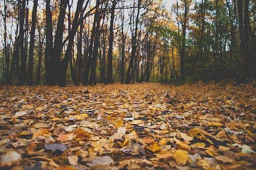 Photos gratuites de automne, feuilles d'automne, forêt, parc