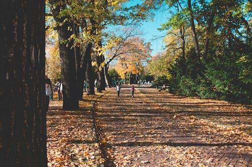 Photos gratuites de arbres, automne, parc, route