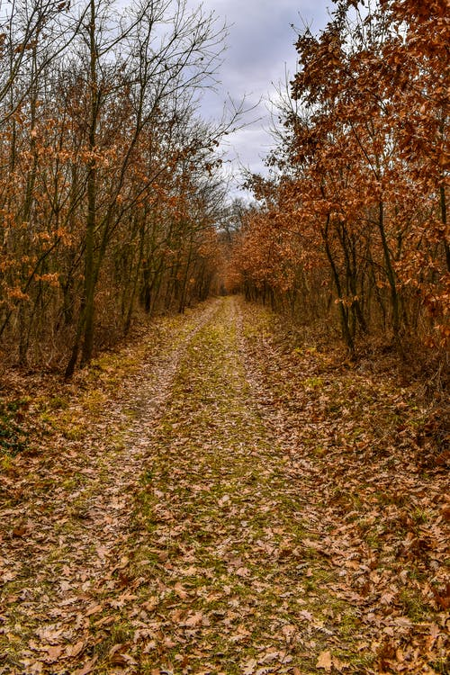 Darmowe zdjęcie z galerii z chodzić, czerwony, droga, drzewa