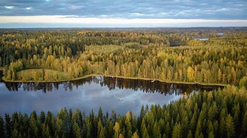 Foto d'estoc gratuïta de a l'aire lliure, aigua, arbres, callat