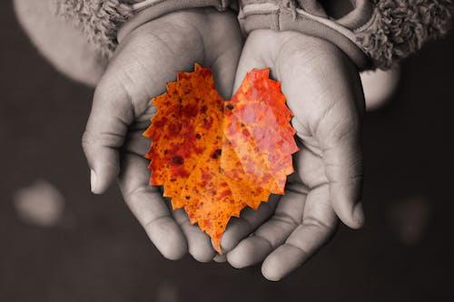 Free stock photo of autumn, autumn color, autumn leaves
