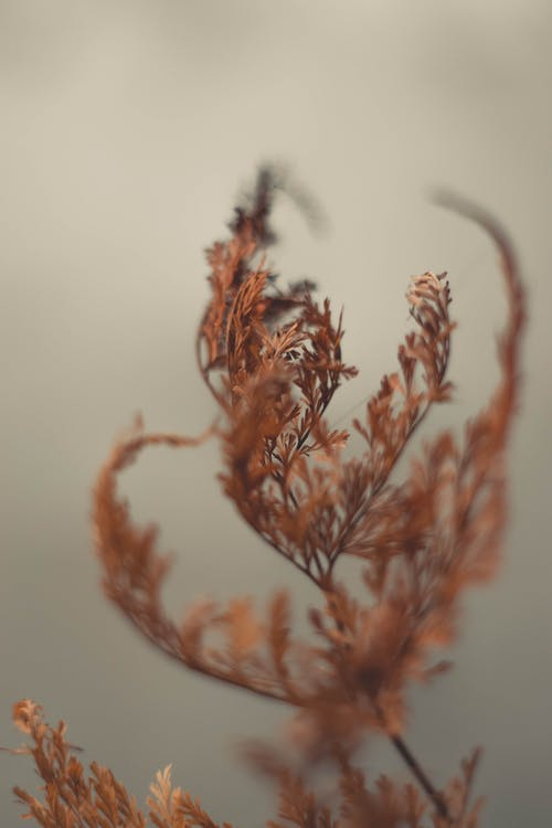 Бесплатное стоковое фото с выборочный фокус, глубина резкости, коричневый, листья