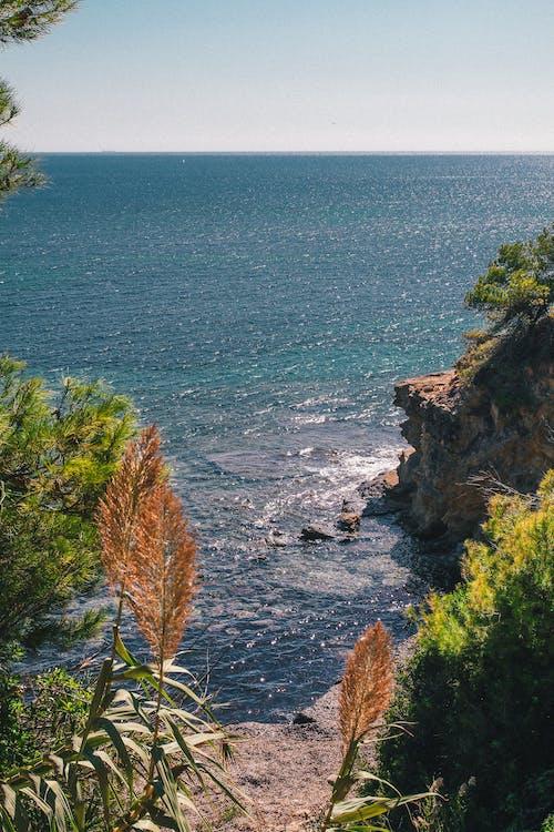 Immagine gratuita di acqua, alberi, bagnasciuga, estate