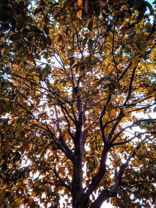 Бесплатное стоковое фото с дерево, листья, осенние листья, осенний цвет