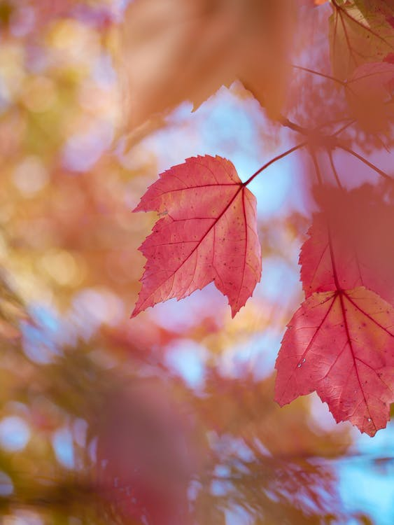 Selective Focus Photo of Orange Leaves