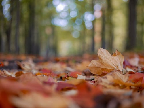 Free stock photo of autumn, autumn color, autumn leaves, fall foliage